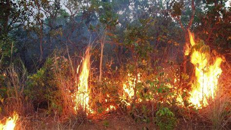 amazon forest fire risk  increase   nasa