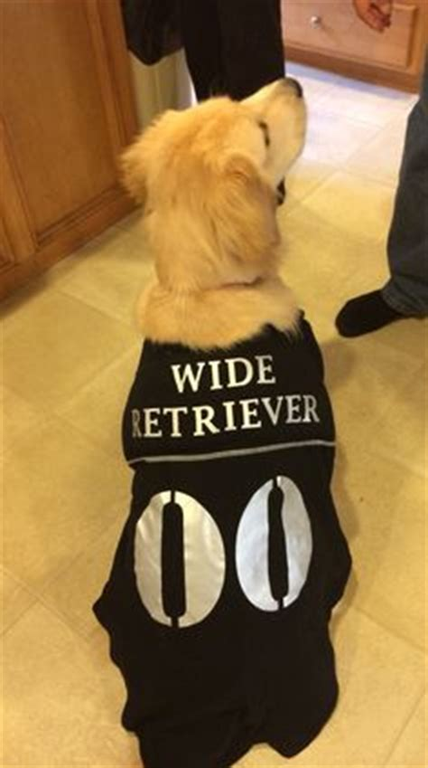 costumes for golden retrievers 1000 images about a n i m a l s on golden retrievers golden retriever