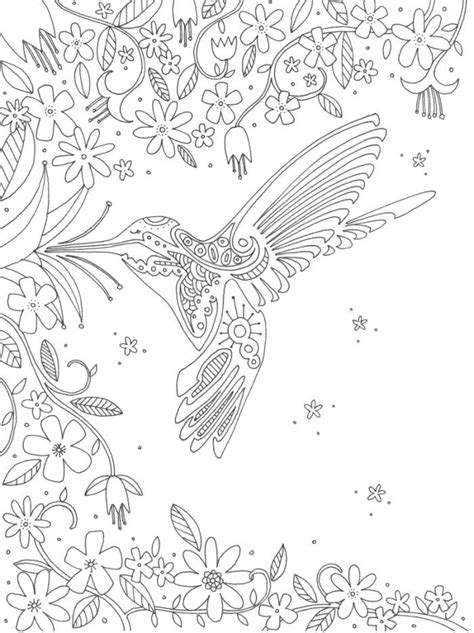 coloring pages for adults hummingbird hummingbird 214 adult colouring owls birds zentangles 214