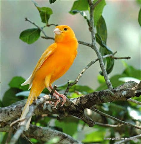Harga Reebok One Cushion harga jual burung kenari lokal warna orange kenari lokal