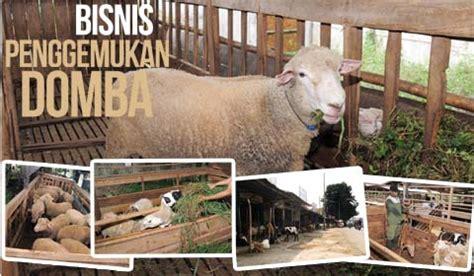 agromedia untung besar dari penggemukan domba agromedia