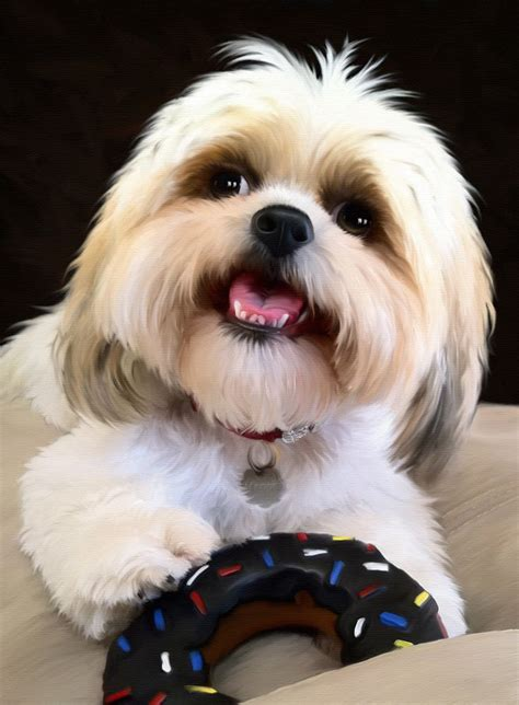 happy shih tzu 595 best images about shih tzu pictures on maltese shih tzu shih tzus and