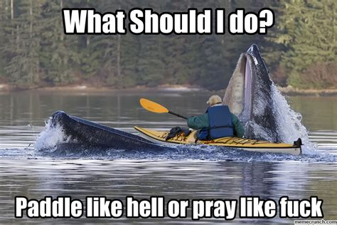 Jaws Meme - whale jaws