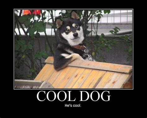 Cool Dog Meme - cool dog know your meme