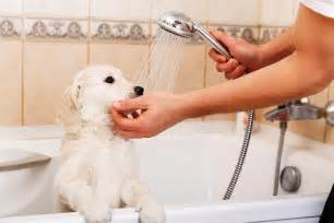 what is dogs in a bathtub plumbing tips for pet owners len the plumber