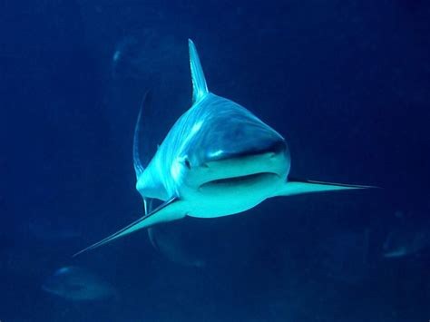 imagenes para fondo de pantalla de tiburones fondos de pantalla de tiburones wallpapers fondos de