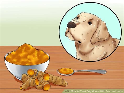 how often to worm puppies 3 ways to treat worms with food and herbs wikihow autos post