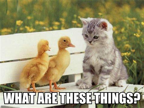 Cute Kitten Memes - funny cute kitten meme www imgkid com the image kid
