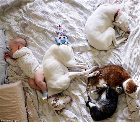 sleeping baby and puppy captures adorable snaps of sleeping babies snuggled up with rescue dogs daily
