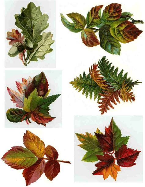 decoupage leaves 28 images 4 napkins autumn leaves