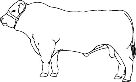 Cow Drawing Outline by Cow Outline Image Images