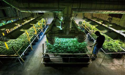 indoor grow supplies colorado springs easily your cannabis grow environment 365 days a year
