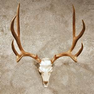 Mule deer antler mount 10398 the taxidermy store