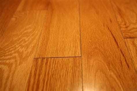 Removing Glue From Wood Floor by How To Remove Adhesive From Wood Floors