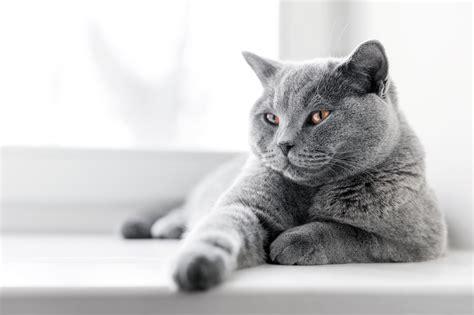 gatto in appartamento come tenere un gatto in casa gatto in appartamento