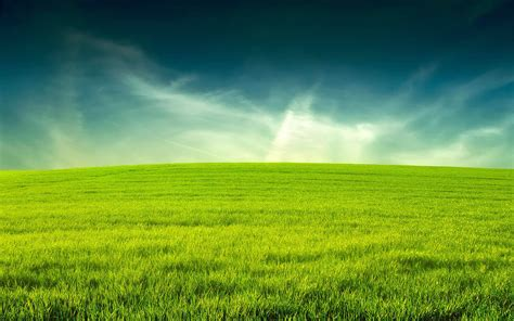 green grass landscaping search results for puzzles pic calendar 2015