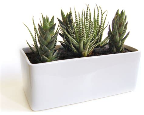 modern planters indoor cactus garden in gloss planter modern plants by lushmodern