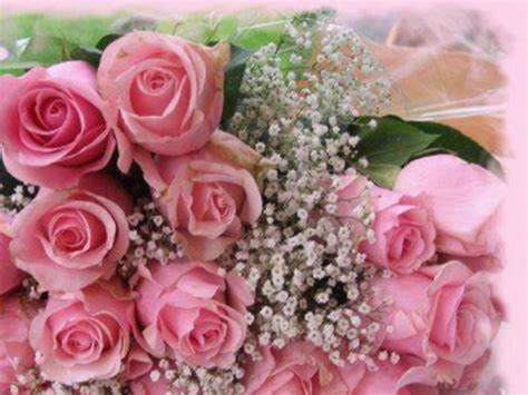 google pink roses images pink roses google search roses of all types and