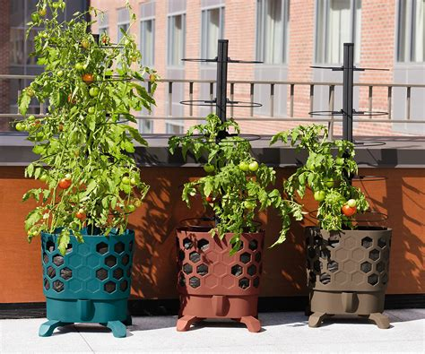 Self Watering Tomato Planter by Gardener S Revolution Self Watering Tomato Planter With