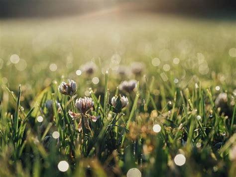 como  produzido  cheiro da chuva ou de terra molhada