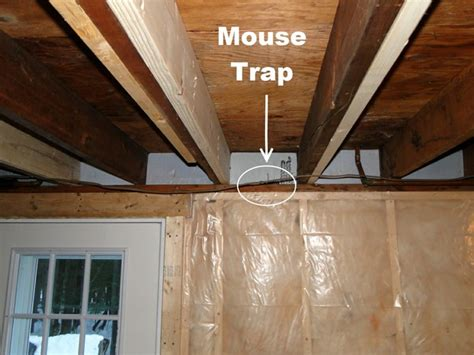 how to get rid of mice in basement the best mouse traps