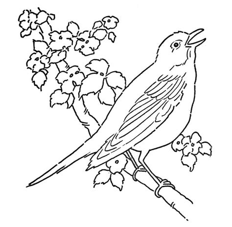 coloring pages of state birds and flowers coloring pages flowers and birds state birds and flowers