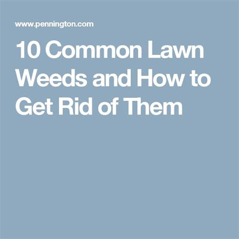 how to get rid of grass in flower beds 25 best ideas about common lawn weeds on pinterest