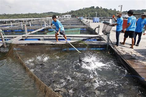 sle business plan on fish farming fish farming in nigeria how to start business naij com