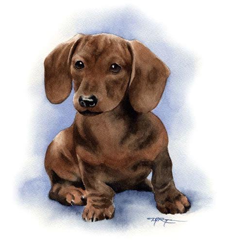 puppies puppies artist dachshund puppy print signed by artist dj rogers