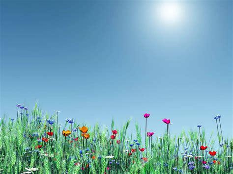 Backyard Field Goal Posts Desktop Backgrounds 70 Colourful Photos Of Spring