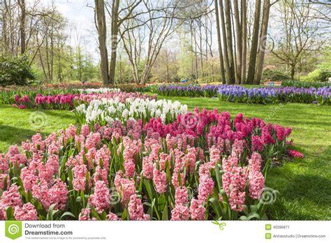 imagenes jardines keukenhof la primavera florece en el jard 237 n holand 233 s keukenhof