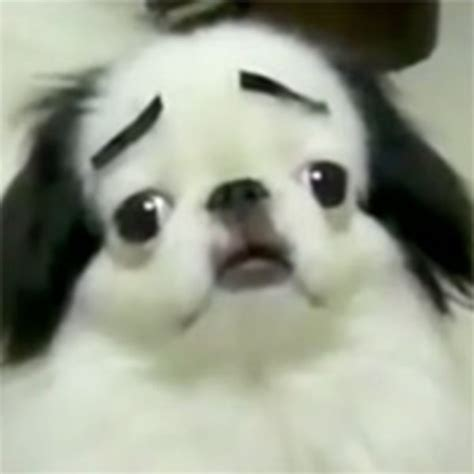 with eyebrows dogs with eyebrows your meme