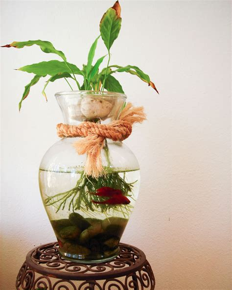 Betta Fish Vase by Reusing Your Flower Vase In Decorating 187 Blooms Today