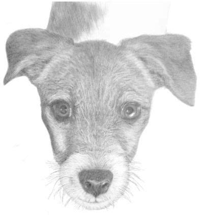 Drawing Animals In Pencil Pdf Download Review Is It | pictures animals animals animals animals animals drawings