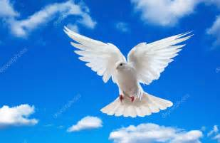 dove open wings pictures to pin on pinterest pinsdaddy