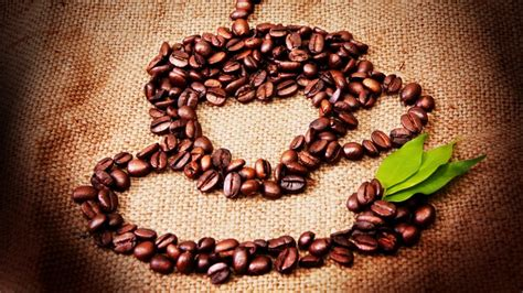 coffee seeds wallpaper hd wallpaper background coffee seeds cup hd wallpaper wallpaperfx