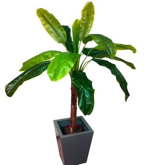 mini banana tree the equadorian miniature banana plant artificial tree