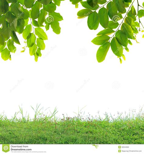 wallpaper green leaves on white background green leaves and green grass stock photo image 32044592