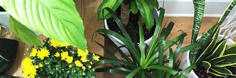 image gallery nasa chrysanthemum air image gallery nasa chrysanthemum air
