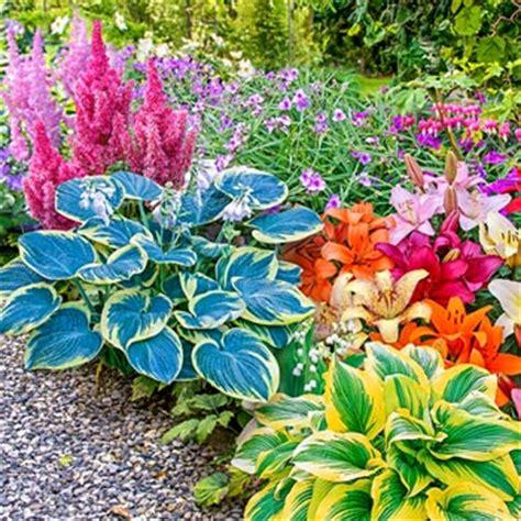 shade perennials shade garden kit hostas astilbe
