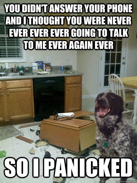 Dog Phone Meme - you didn t answer your phone and i thought you were never