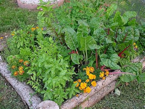 6 ways to start a small organic garden