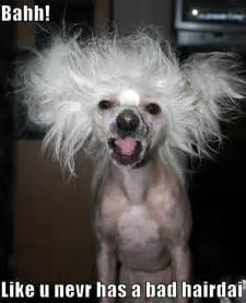 Bad hair day dogs photo 11883936 fanpop