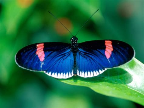 imagenes mariposas hd butterfly photos nature wallpapers