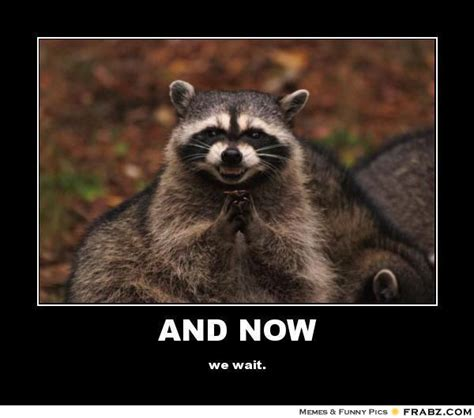 Raccoon Memes - excellent raccoon meme old board of funnies
