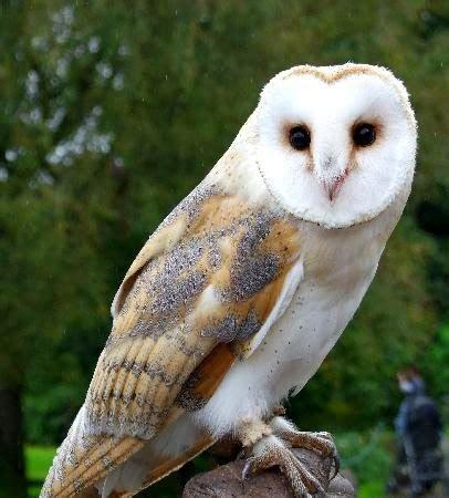 Sale Boneka Owl ekarohmawati