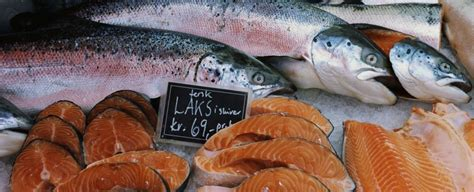 salmone come cucinarlo salmone norvegese come cucinarlo e le sue propriet 224
