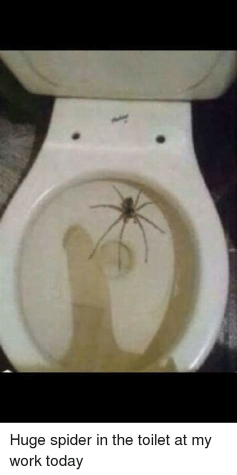 toilet meme 25 best memes about spider in the toilet spider in the