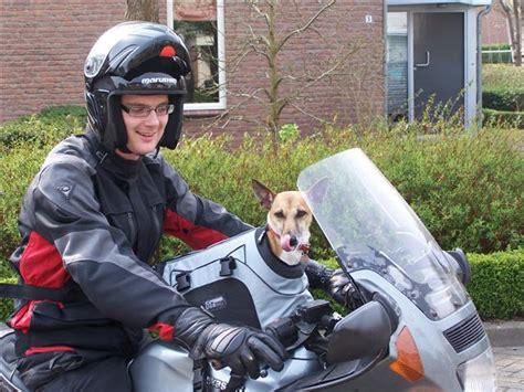 hond  een zijspan van een motor hondenforum