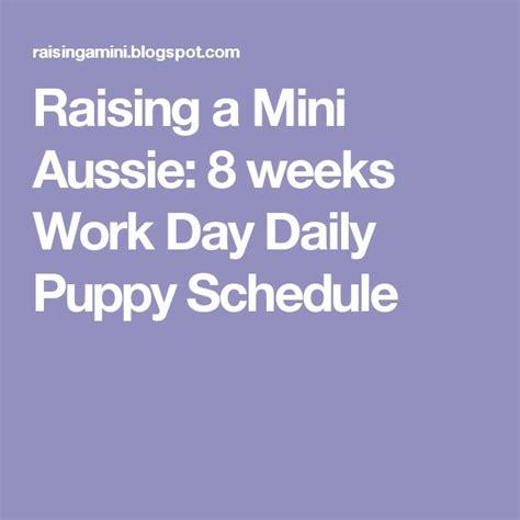 8 week puppy schedule 25 best ideas about puppy schedule on puppy care puppy schedule